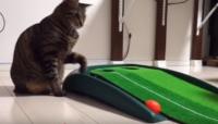 にゃんともかわいい♪ 肉球でボールをリターンする猫とパターゴルフする動画♪ Cat-omatic ball return video for golf putting mat【佐世保】 させぼんぺっと4