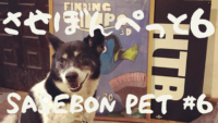 【させぼんぺっと6】ブルブルする犬 - スローモーション PEG THE JAPANESE DOG shaking in slow motion【SasebonPets #6】