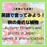 "<span class=""title"">【散歩】秋の身近な植物を英語で言ってみよう!Autumn Flowers and Plants in Japan – what are their names and pronunciation? 【花】【金木犀】【道端の草花】【紅葉狩り】</span>"