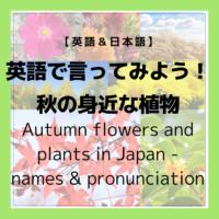 【散歩】秋の身近な植物を英語で言ってみよう!Autumn Flowers and Plants in Japan – what are their names and pronunciation? 【花】【金木犀】【道端の草花】【紅葉狩り】