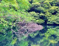 御橋観音&牧の岳公園 Ohashi Kannon Temple and Makinodake Park – 天空の石橋とマイナスイオンの癒し【吉井・佐々へプチトリップ④】【のんびり女子旅】